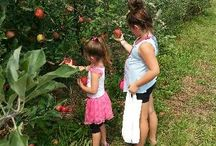 Milburn Orchard's Apples / Apples, Apples, Apples!  So many varieties and one of our most popular UPICK Adventures!
