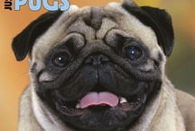 """PUGS! / This board is dedicated to my """"baby"""" Buster!  :-)  He runs my household."""