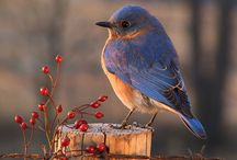 birds and animals / Pictures of birds and every animal I can find! / by Barb Kochapski