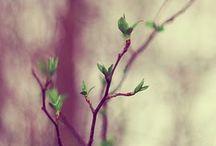 SEASONS ~ Spring ~ Kevät