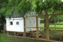 a  - chicken house