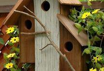 Ninhos pássaros