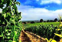 Soberanes Vineyard