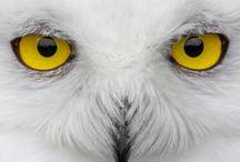 Animal Totems/Spirit Guides