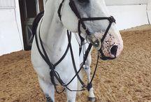 konie i my