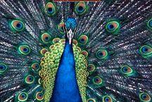 animals / by Esther Piekaar