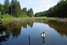 Bayerischer Wald / Ausflugsziele im Bayerischen Wald
