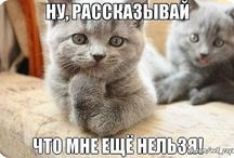 прикольчики про котичков