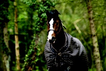 Heste / hesteting
