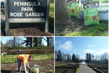 Peninsula Park Rose Garden  / Cascade Minerals donated nearly 2,000 pounds of volcanic soil booster to help with the replanting of Peninsula Park, Portland's oldest rose garden which celebrated its 100th anniversary in June 2013 with a ceremonial rose planting event.