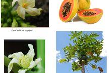 Jardin / Plantation