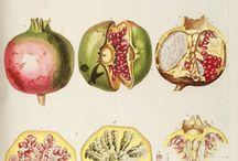 фрукты ботанические