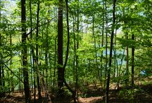 Big Creek / Norris Lake construction at the Big Creek lake community located in Lafollette, TN.