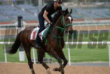 Epiphaneia / by Blood-Horse