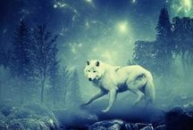 Becoming the Wolf...