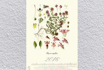 calendar / Calendar, Poster, Plant Drawing