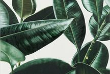 INTERIORS | INDOOR PLANTS | JUNGLE FEVER / Decorating with plants and deep shades of green