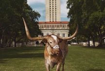 """Why the Texas MBA is right for me"" / Getting to know you"