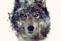 Wolves-Farkasok