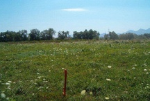 Romanian agricultural land