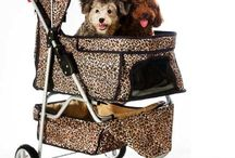 Products and Accessories / Pet products and accessories