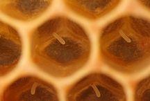 Honing / Honing, het product wat nodig is voor de mens. Een vorm van apitherapie, natuurlijke geneeswijze. Het versterkt ons immuumsysteem, is goed voor ons uithoudingsvermogen en werkt antibacterieel. www.apitherapie.nl