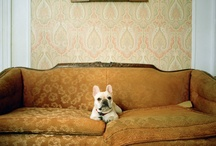 Frenchies / by Lisa Brown