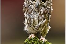 birds of prey - owls