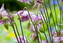 Schaduwplanten / Planten voor het schaduwdeel van de tuin.