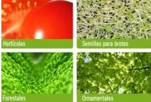 """Especies y Variedades / Diversidad en las huertas, fruterías y supermercados ... el """"juego varietal""""."""