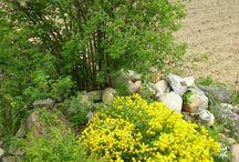 Wiosną ogród