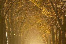 Fall Is My Favorite Season / by Tom Uchida