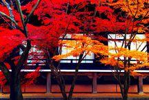紅葉 / 京都の秋の色。