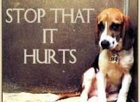 Please help Cats &  Dogs-Don´ t let us die !!! / Save this cats & Dogs before being destroyed !!!   ....................Adopt - don´ t shop !!!............................