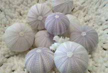 Seashells - Crafting & Decorating / http://www.lovingcoastalliving.com/