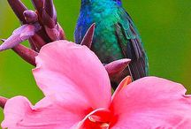 Beija-Flores e Outras Aves / by Cristiane Marino