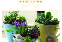 Tea Cup Gardens / by Monica Doumanis