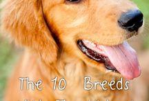 Sweet Puppy Love.... / I ❤️my Dog! / by Shannon Roman