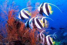 Foto subacquee
