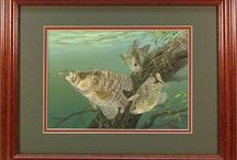 Crappies Fish Art / Crappies fish artwork