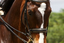Horse Beauty - 2