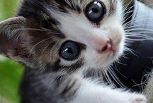 Cute as Hell