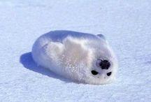 BABY SEALS!!!