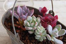 amo las plantas