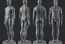 Male Anatomy / Here I will pin references for organic modelling. www.oddcustoms.co.za #organic #anatomy #biped #quadruped