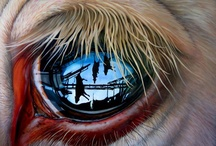 Animal Rights...Their Living HELL! / Be Their Voice! / by Rhonda Fox