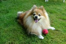 Doggy Stuff / Dog dog dog doggy doggy dog dog..... / by Hedwig Rox