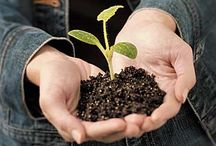 Gardening | Garden Ideas / Smart ideas and solutions for the garden