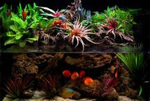 Aquascaping - Planted Aquariums