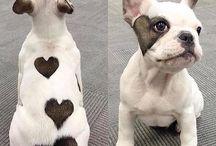 DOG = amor